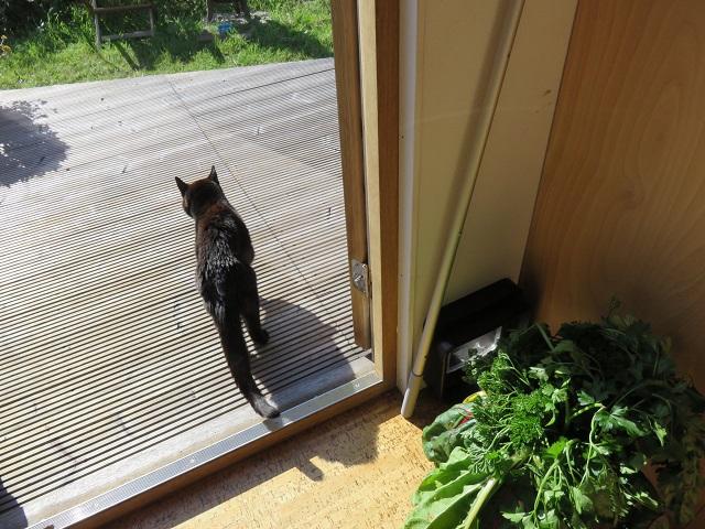 タイニーハウス 猫