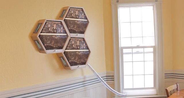 お洒落な養蜂ケース「Modular Honeybee Habitats」