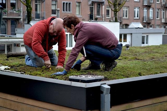 ハウスボートの屋上緑化作業