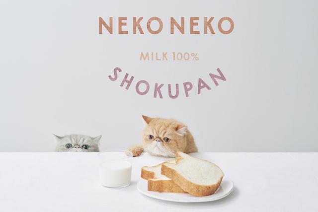 猫と食パン