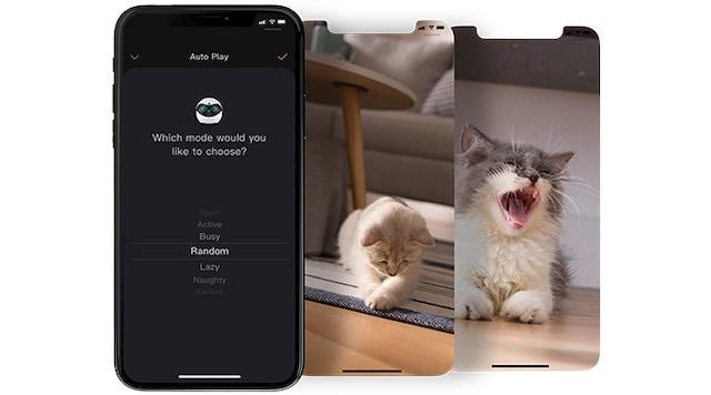スマホと猫画像