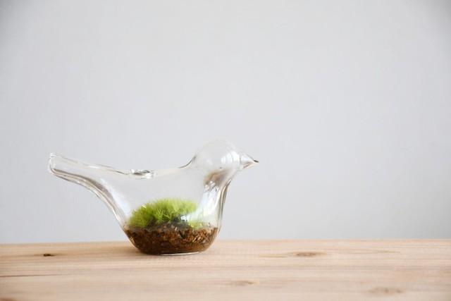 【苔テラリウム】小さなコケの森 小鳥