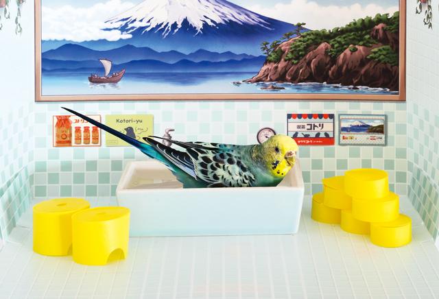 レトロなお風呂で水浴びできちゃうバード銭湯 バードバス 水浴び 陶器 小鳥水浴び 水浴び場所 小鳥のお風呂 小鳥の銭湯 フェリシモ