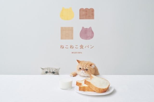 猫とねこねこ食パン