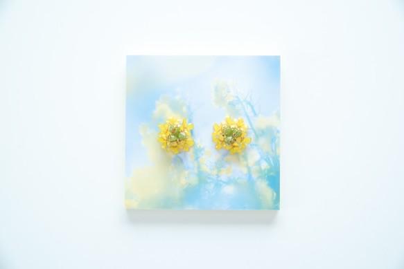 【菜の花-Full*Bloom-】春を着飾るピアス※飾れるフォトパネル付!