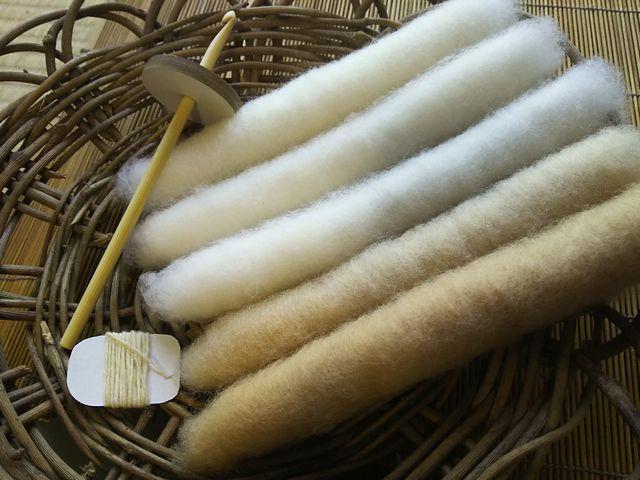 綿の簡易手紡ぎキット 自家栽培和綿の篠10g・糸紡ぎ解説動画付 【2020.11改訂版】