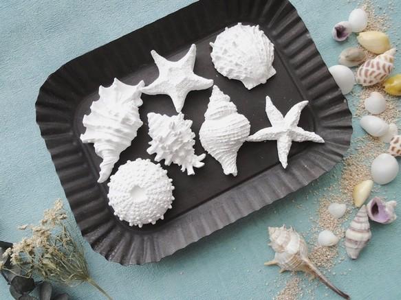 貝殻やヒトデのアロマストーン